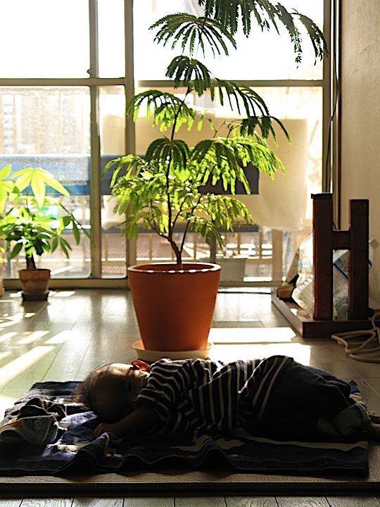 tora-sleep.jpg